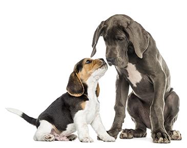 Consultatiebureau voor pups en kittens